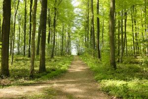 Meest kwetsbare waardevolle bossen